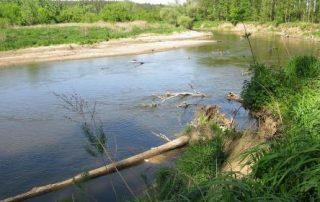 Řeka Morava je na meandrech ponechávaná v přírodním stavu